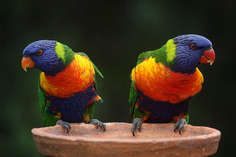 colourbird.jpg
