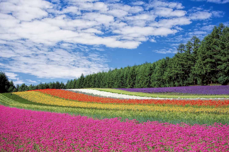 colourfield.jpg