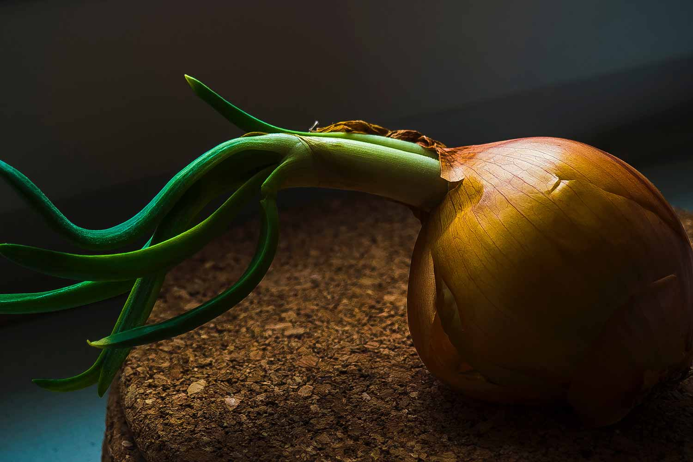 onion-.jpg