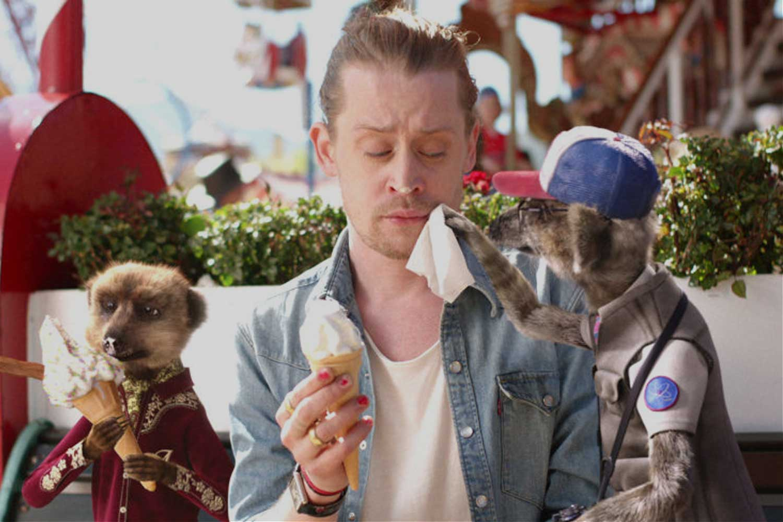 Meerkats eating ice cream